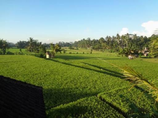 Bali 2014 161r