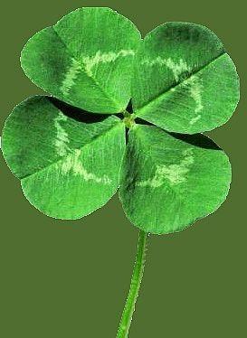 4 leaf